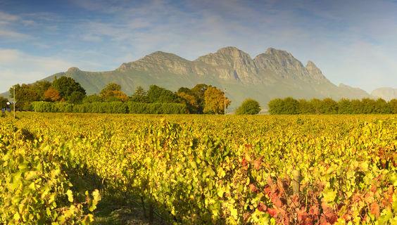 © Südafrika Weininformation
